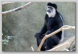 A Columbus monkey