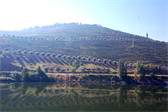 Stunning vineyards (a bit obscured by wildfire smoke)