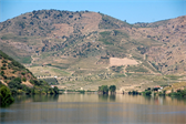 Terraced vineyards just outside Pinhão