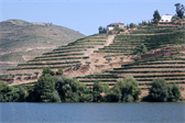Terraced vineyards on the Douro river