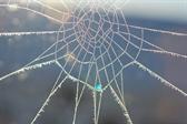 As the web thaws...